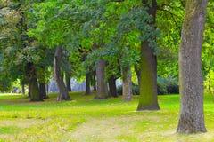 Park Lizenzfreies Stockbild