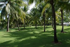 Park. Tropical Landscape royalty free stock photo