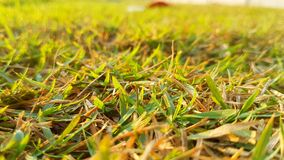 Park Zdjęcie Royalty Free