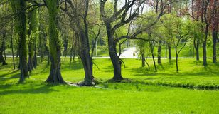 Park. A panoramic background of a beautiful park with trees and green grass Royalty Free Stock Photography