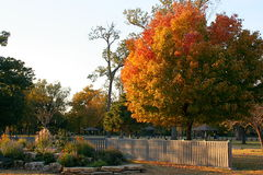 Park. Fall-colored tree in a park near a fence and flower bed royalty free stock images