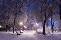 Park abgedeckt mit Schnee nachts. Lizenzfreie Stockfotografie