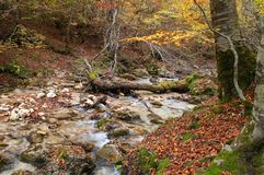 Park of Abruzzo, torrent scerto Stock Photography