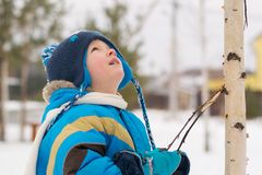 A child boy takes a walk in a winter forest stock images