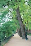 A green space in a park public, Paris, France. Park ain gin grin grein greein greenin sin spin spain spacin spacein public paris france stock images