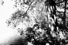 Park of Alfusqueiro Stock Photography