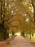 Park alley. Park lane with red autumn leaves royalty free stock photo