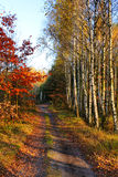 Park alley. Footpath among yellowed trees in autumnal park Royalty Free Stock Images