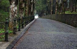 Park alley. Stone paved park alley with trees on each side Stock Photos