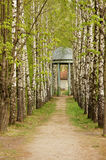 Park alley. Birch alley in the park royalty free stock photos