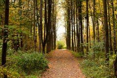 Park alley. With a footpath autumn day Royalty Free Stock Images