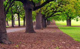 Park alley Royalty Free Stock Images