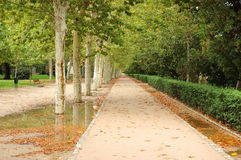 Park alley. In the beginning of autumn stock photography