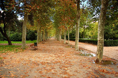 Park alley. In the beginning of autumn royalty free stock image