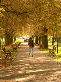 Park alley in autumn. A young woman walking in the park in autumn stock photos
