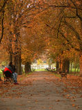 Park alley in autumn Stock Photography
