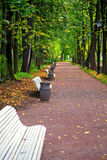 Park alley in autumn. Trees alley in a park with white benches during fall season Royalty Free Stock Photography