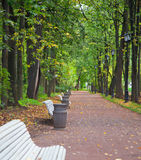 Park alley in autumn. Trees alley in a park with white benches during fall season Stock Photo