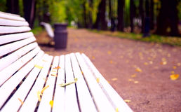 Park alley in autumn. Trees alley in a park with white benches during fall season - focus on bench Royalty Free Stock Images