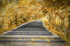 Park alley in autumn Royalty Free Stock Image