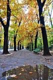 Autumn Alley Stock Photos