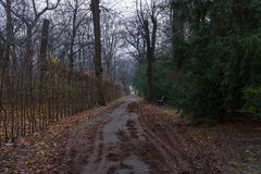 Park alley Charlottenburg Palace in rainy weather Royalty Free Stock Photo