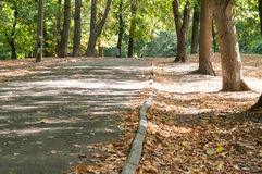 Park alley in the city Royalty Free Stock Photo