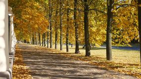 Park Alley With Colorful Bright Fall Leaves On The Trees In Golden Autumn Day. View of pedestrian alley in the city park in golden autumn day with bright stock video