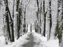 Park alley covered with snow Stock Photography