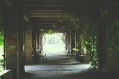 Park alley and creepers Royalty Free Stock Photography