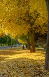 Park alley in fall. Park alley covered in autumn dead leaves royalty free stock photos