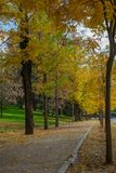 Park alley in fall. Park alley covered in autumn dead leaves royalty free stock photo