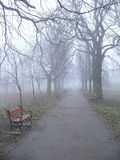Park alley in the fog. Park alley with red benches in autumn stock image