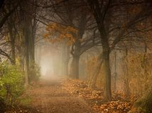 PARK ALLEY IN THE FOG. A park alley in the autumn morning fog stock photography