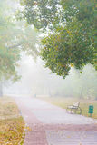 Park alley in the fog Stock Images