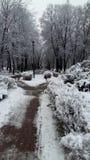 Park alley frost frosty hoar landscapes natura season snow scenery. Winter snowy Royalty Free Stock Photos