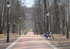 Park alley in good spring day Royalty Free Stock Photo