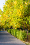 Park alley, hedge and green orange trees. Park alley, hedge and green orange trees in early October stock photo