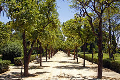 park alley in hot sunny day Royalty Free Stock Image