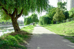 Park alley. Long  Alley in the city. Alley near the river. Willow near park rides stock photography