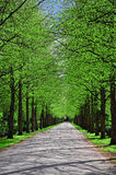 Park alley. Parkway in springtime when tree leaves just come out Royalty Free Stock Photo