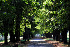 Park alley. Path in a park green trees early autumn Stock Photos