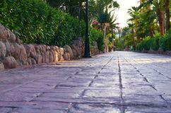 Park alley paved of stone tiles, green palms and bushes along the road.  royalty free stock images