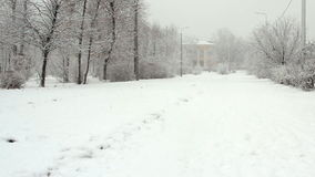 Park alley in a snowy winter day stock footage