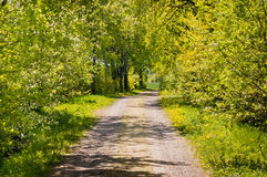 Park alley in spring Stock Photography