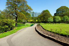 Park alley in spring Royalty Free Stock Photos