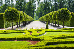 Park alley with symmetrically planted trees. Park alley with symmetrically planted trees, hedges blurred. Public park stock photography