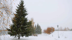 Park alley tree way winter during deep snowfall Royalty Free Stock Images