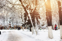 Park alley tree way winter Royalty Free Stock Image