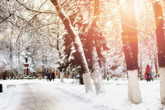 Park alley tree way winter Royalty Free Stock Photography